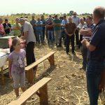 Dan polja kukuruza