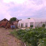 Zaštita zasada krompira: Obavezna folijarna prihrana