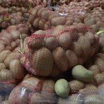 Kontrola useva krompira u Pomoravlju: Nema prisustva bolesti