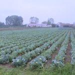 Rađena agrohemijska analiza zemljišta u Jagodini, zasadima nedostaje kalcijuma