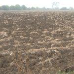 Setva ozimih strnih žita: Koristiti sortno seme u većoj količini