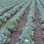 Zaštita zasada voća i povrća: Obavezno tretiranje aktivnim materijama